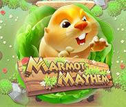 Marmot Mayhem Live